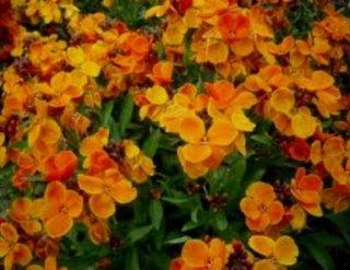 addobbi floreali, lapidi