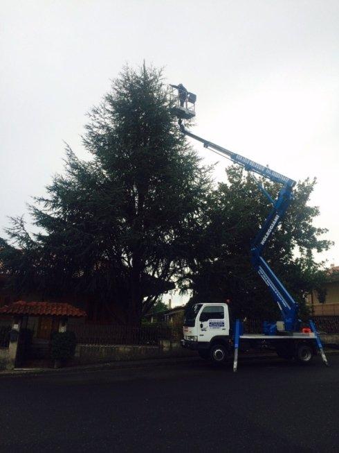 Noleggio piattaforma aerea per potatura alberi