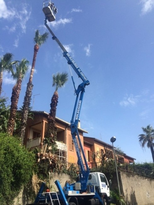 Noleggio piattaforma aerea per potatura palma