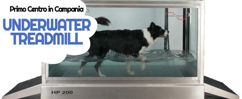 banner promozionale trattamento per cani underwater treadmill