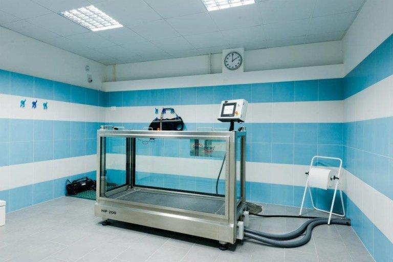 vista laterale di macchinario per la fisioterapia veterinaria