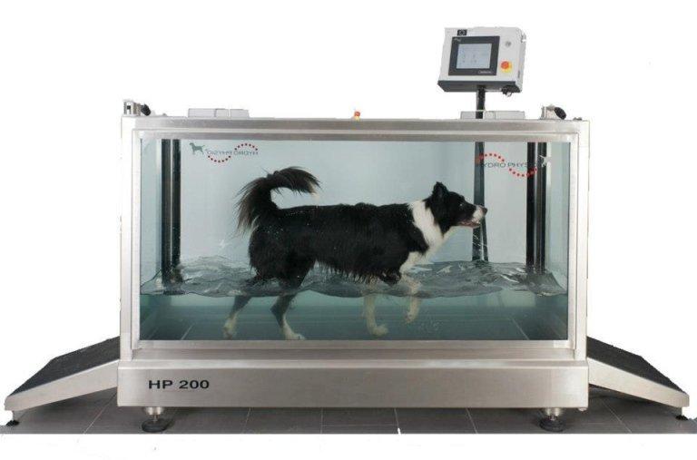 cane esegue trattamento fisioterapico underwater treadmill