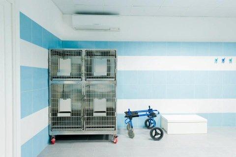box per cani e gatti al centro di fisioterapia veterinaria