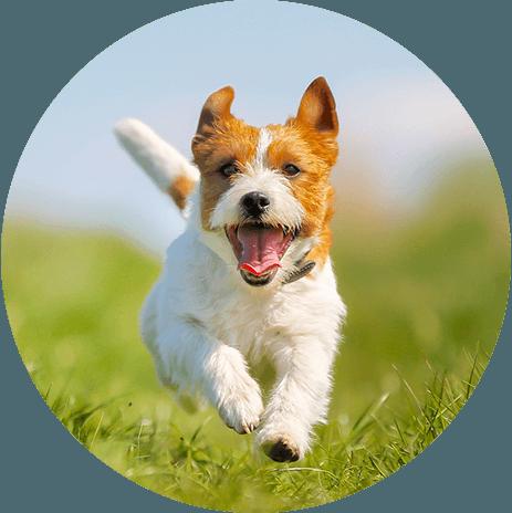 cane corre in un parco