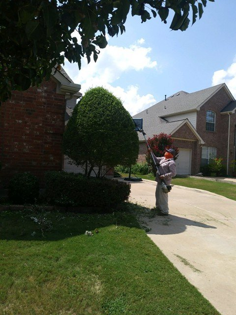 Lawn Services in Mansfield Texas