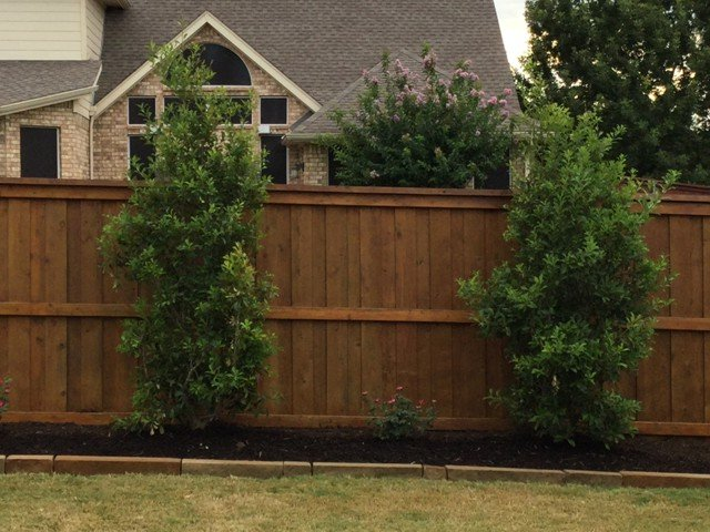 Tree Services in Dallas Fort Worth