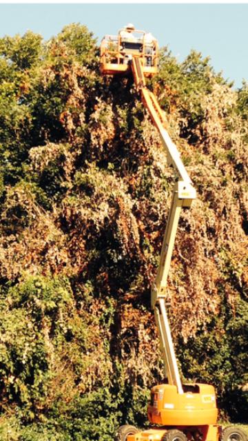 Tree Services in Arlington Texas