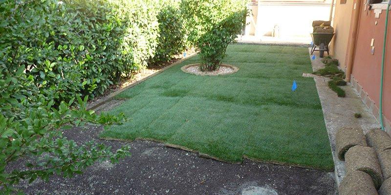 un giardino con un prato non ancora ultimato e al centro una pianta