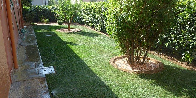 un prato di un giardino con delle aiuole con degli alberi