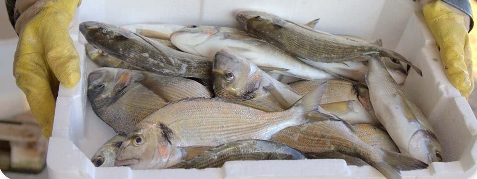 persona mostra un contenitore di pesce fresco