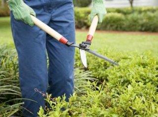 Giardinaggio e potatura Gr Service
