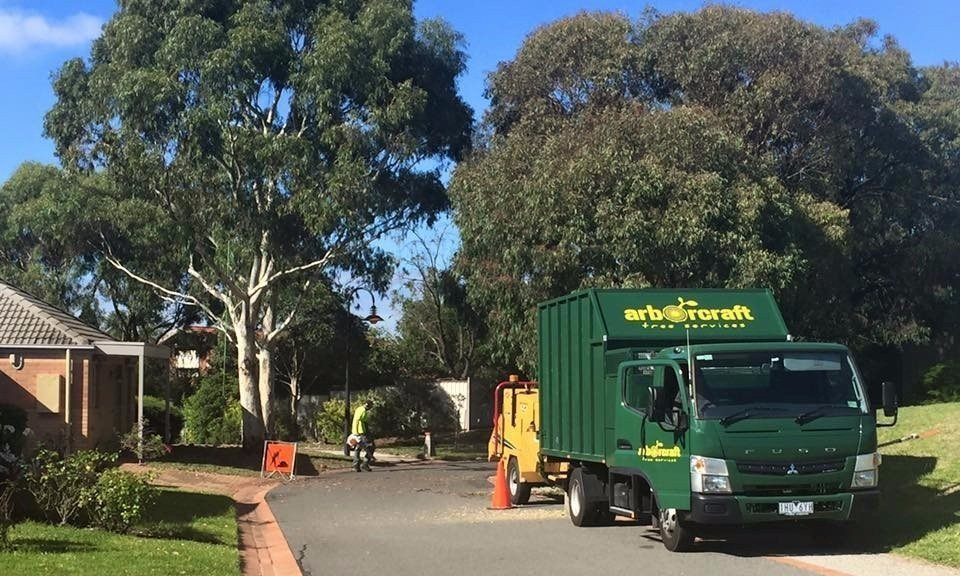tree removal cost melbourne