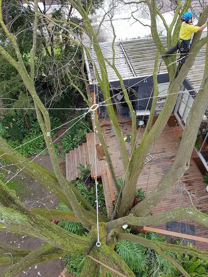 cabling and bracing of trees