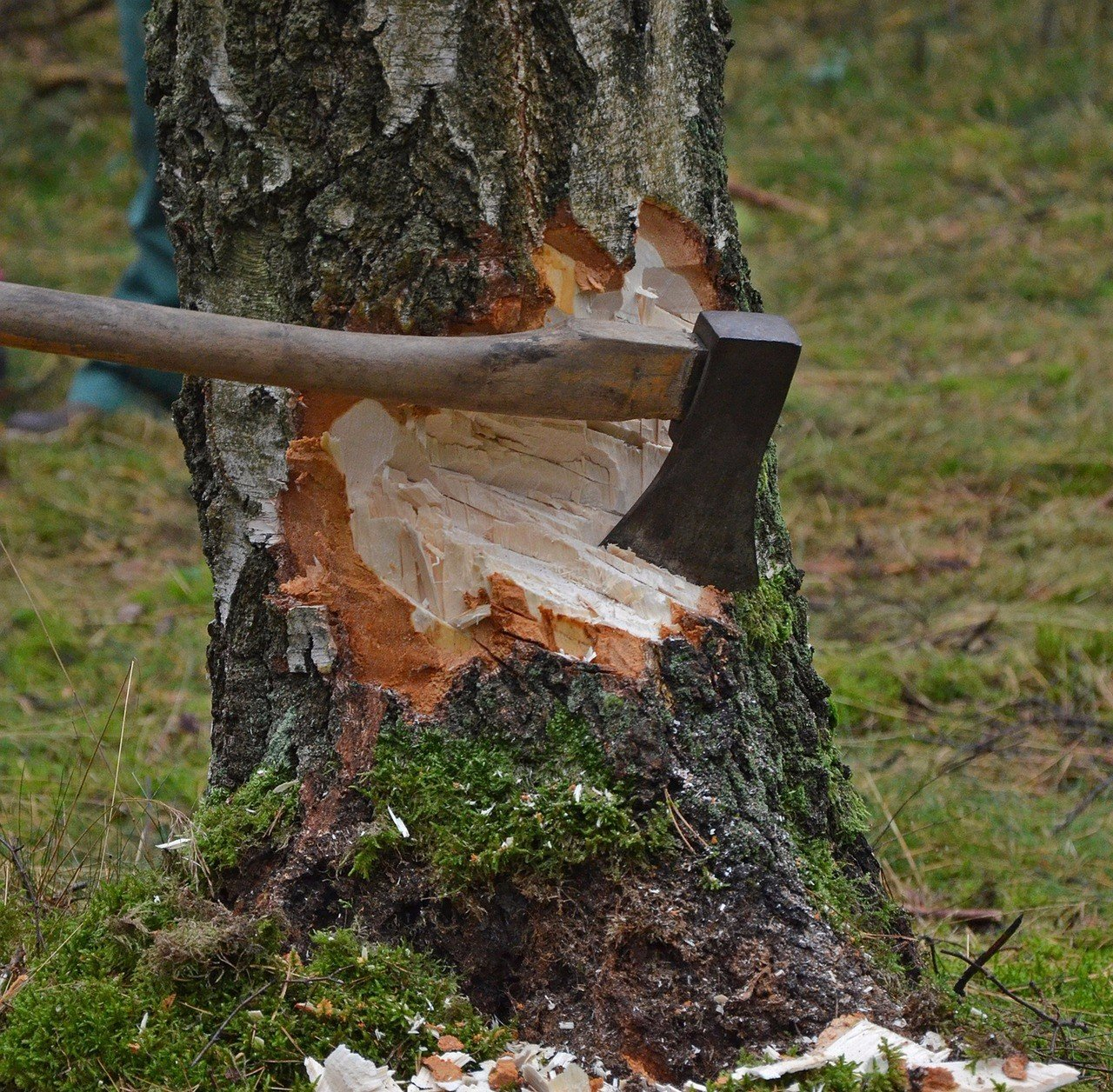 Tree removal services dos and dont solutioingenieria Choice Image