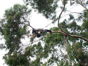 tree weight reduction