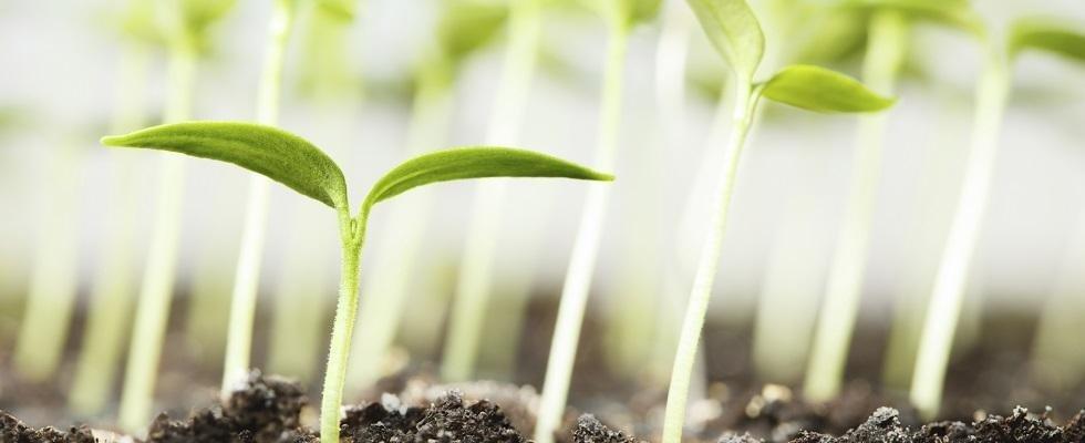 coltivazioni piante