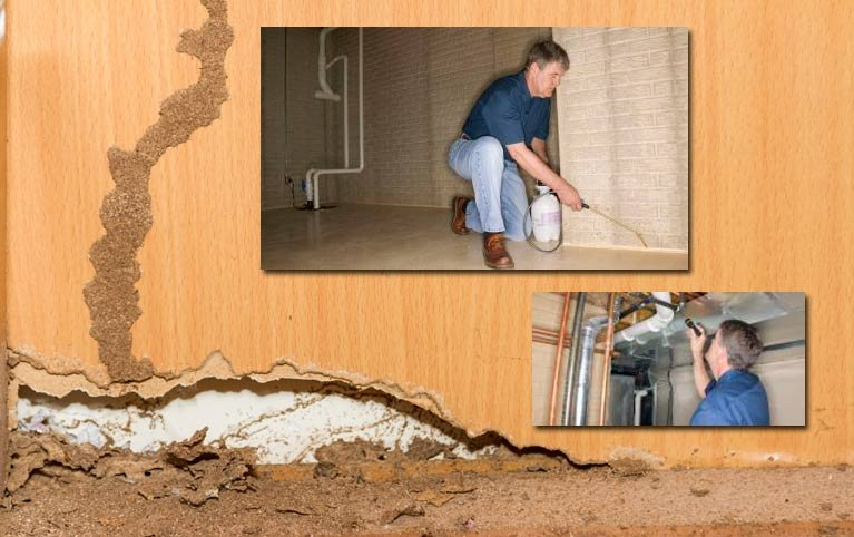 termite control and prevention kalgoorlie and esperance