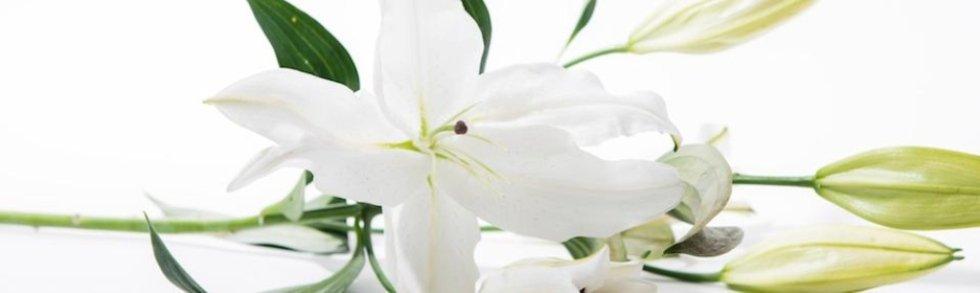 agenzia di onoranze funebri la madonnina