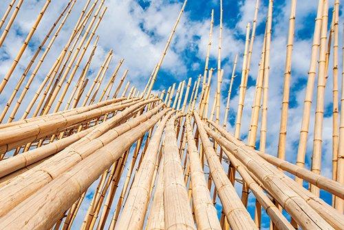 rami di bamboo