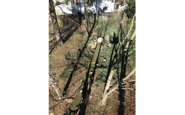 Abbattimento alberi basso fusto