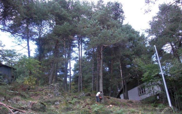Abbattimento alberi verde privato