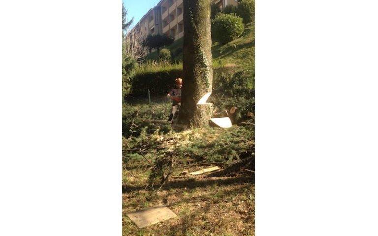 Abbattimento alberi giardini privati