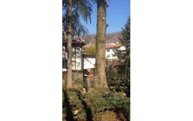 Abbattimento alberi giardini