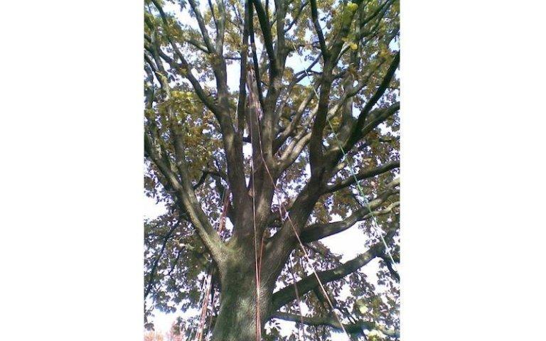 Lavori di potatura alberi basso fusto