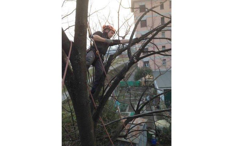 Potatura tree climbing aree verdi