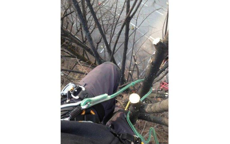 Tree climbing Vivai Giumelli