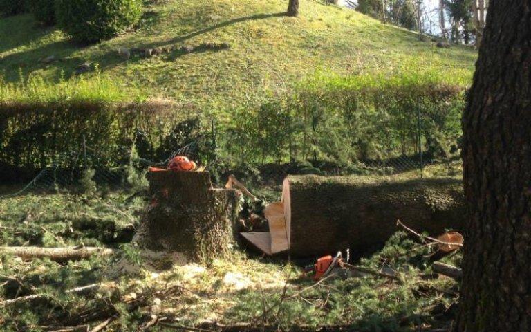 Abbattimento alberi basso fusto Sondrio