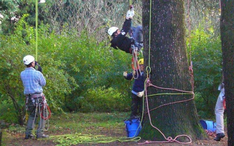 Potatura alberi tree climbing