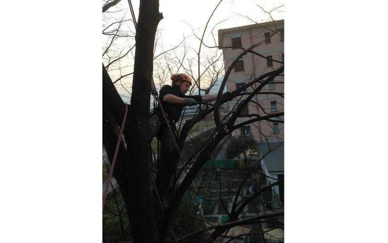 Potatura tree climbing aree urbane