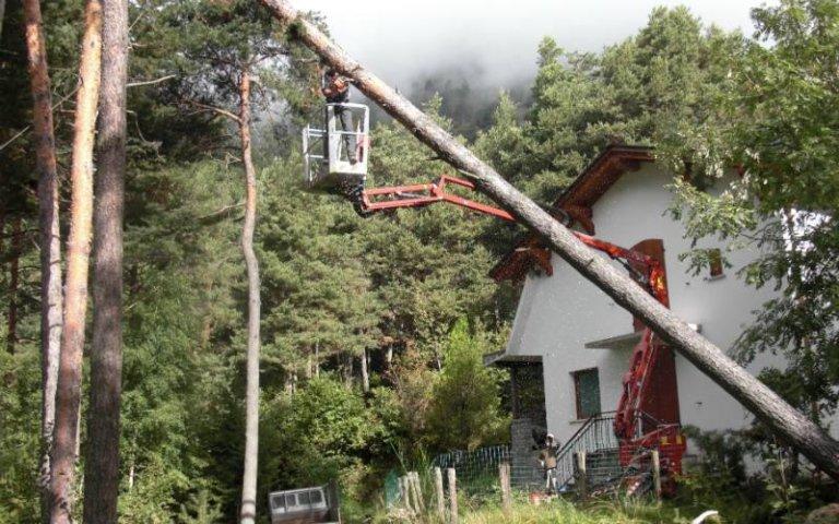 Potatura alberi giardino