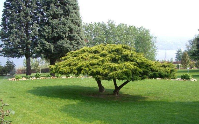 Decorazione giardini privati