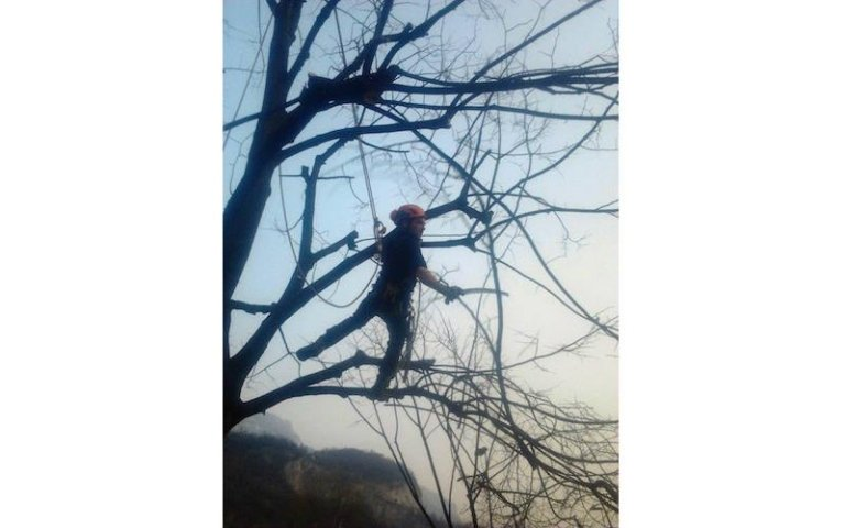 Potatura tree climbing Sondrio