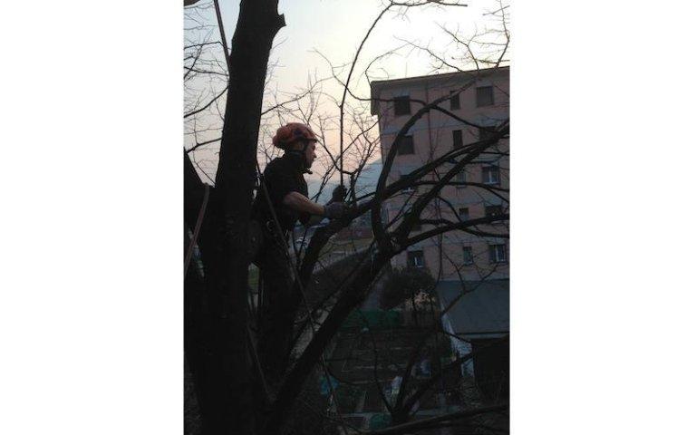 Potatura tree climbing aree verdi Sondrio
