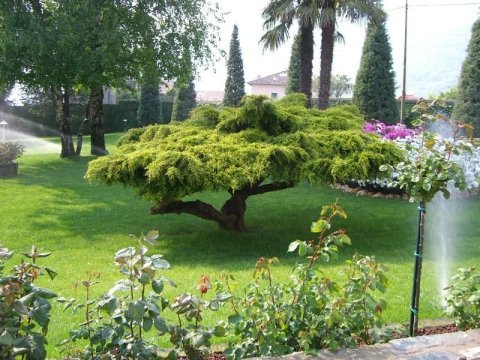 giardinaggio e arte floreale