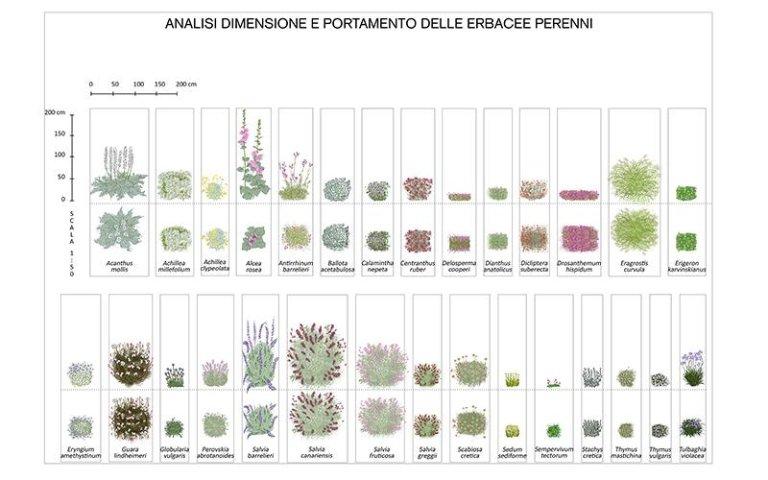 Analisi portamento piante perenni