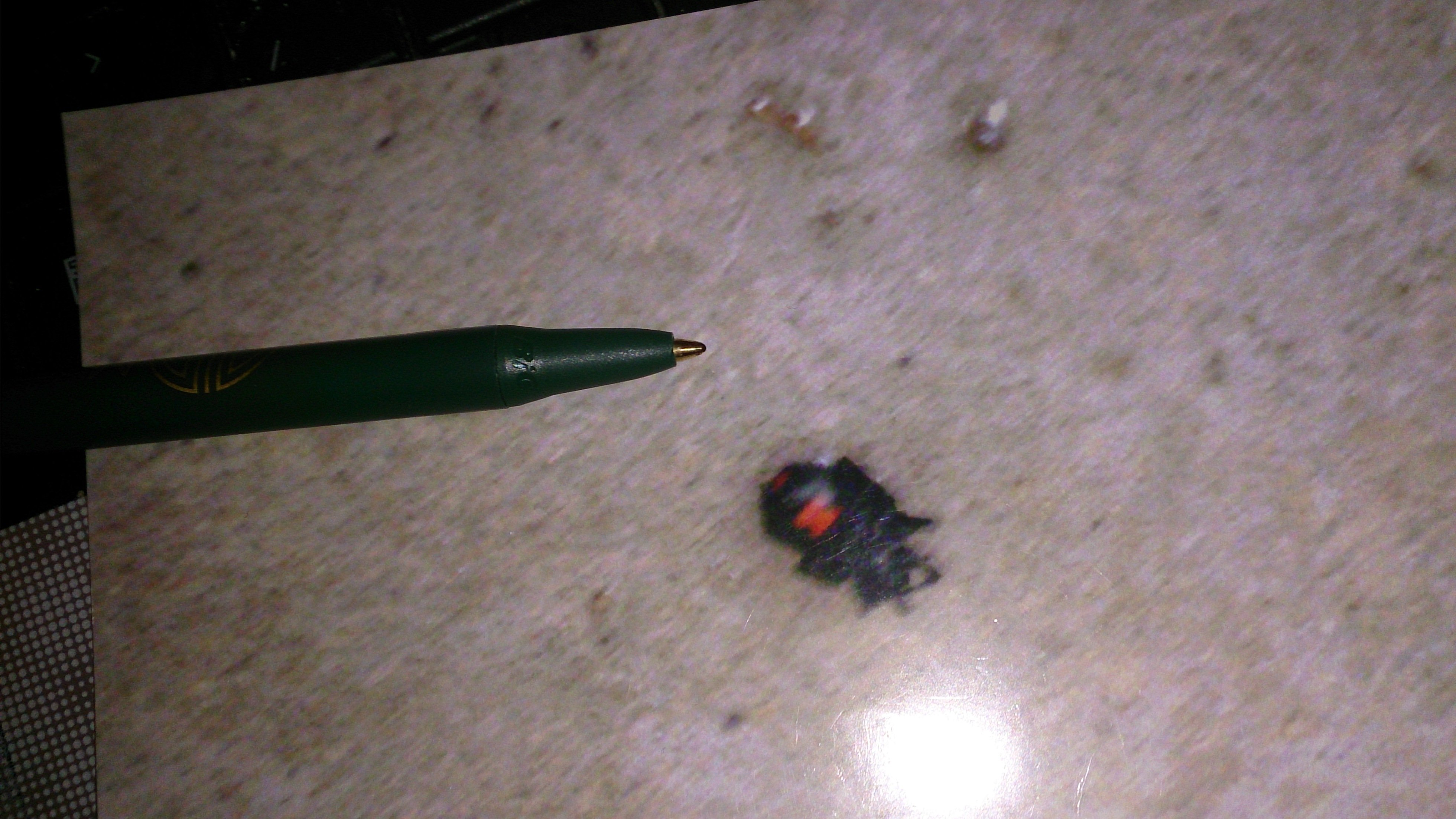 On-site pest control service in Lexington, KY