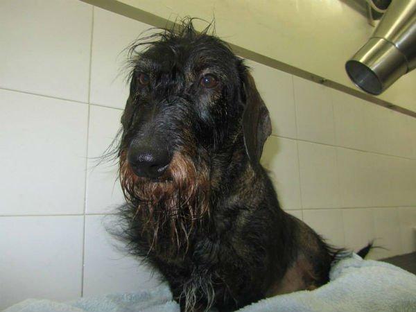 un cane nero bagnato e un phon che lo asciuga