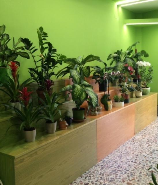 vendita piante manfredonia