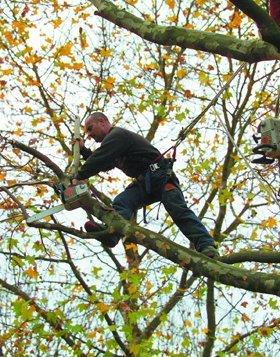 tree surgeon - Basildon - GKS Tree Care - Working Up Tree
