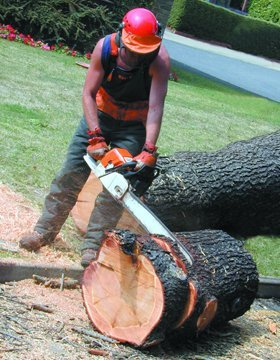 tree surgery - Chelmsford - GKS Tree Care - Stump Grinding