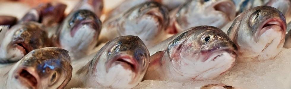 pesche fresco