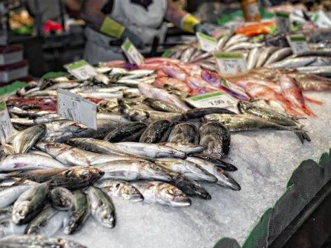 ingrosso pesce fresco