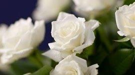 allestimenti floreali funebri