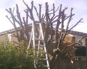 Tree lopping and felling - Teeside - Acklam Tree Services - surgery