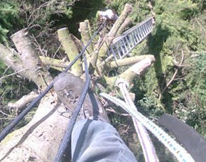 Tree surgery - Teeside - Acklam Tree Services - Tree surgery