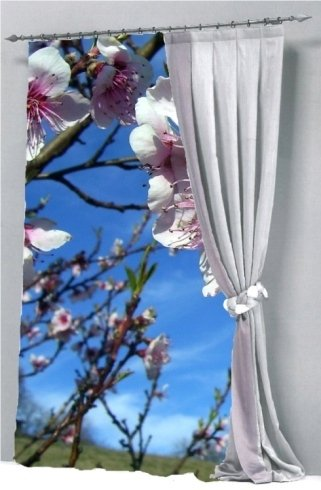 stampa fiori ciliegio
